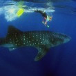 Scuba Diving Pomene Lodge, 7 nights